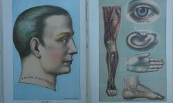 Anatomia hombre