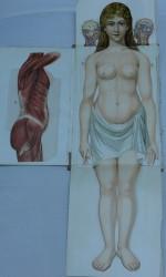 Anatomía mujer (1)