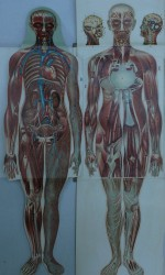 Anatomía mujer
