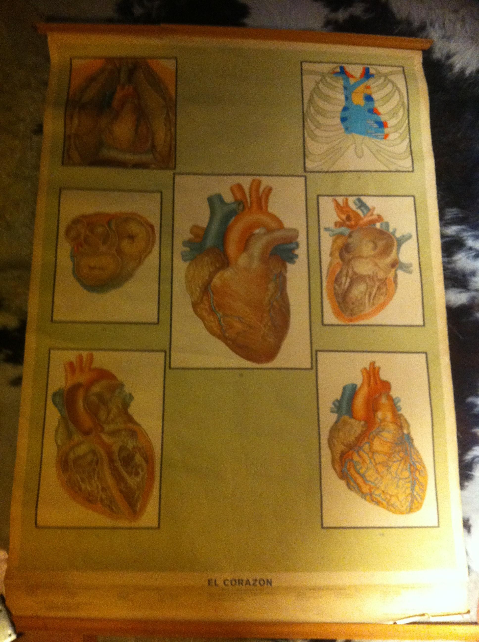 Cartel/Láminas | antigüedadesdecine