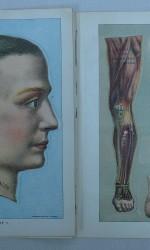 anatomia hombre 60 €