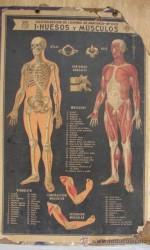 mapa escolar anatomia - 100 €